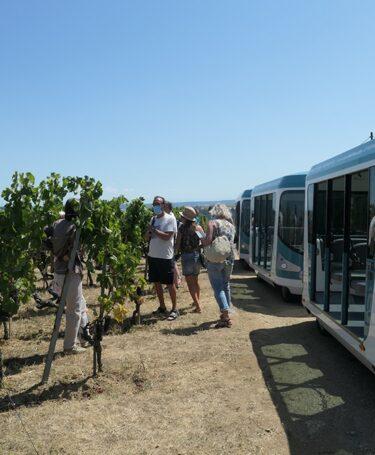 Vienne City Tram dans les vignes