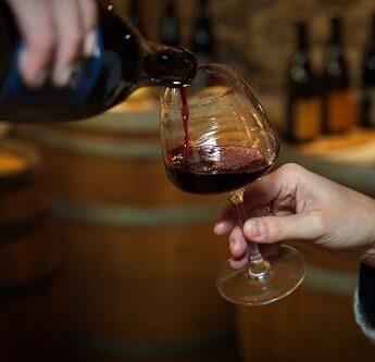 Dégustation de vins à Condrieu