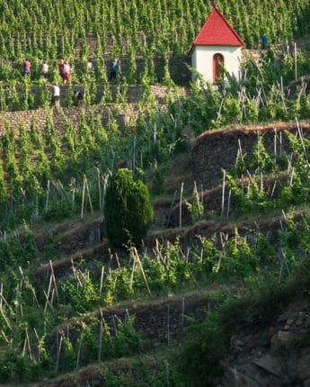 Coteaux escarpés de la vallée du Rhône Nord