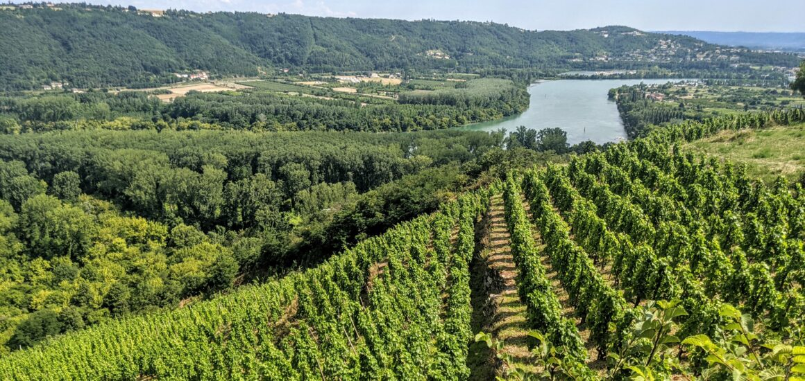 Vignobles © OT Vienne (6)
